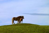 Pferdefreundschaft von blickpunkte