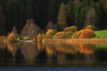 Herbstleuchten by pichris