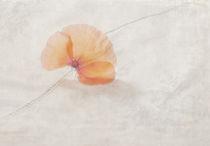 Klatschmohn mal anders by Franziska Rullert