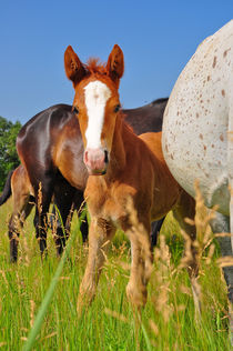 Horse by Svetlana Yukina