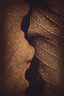 'Texture No1' by Ricardo Segovia