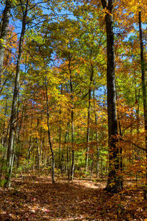 Autumn Forest. USA, Kentucky by Irina Moskalev