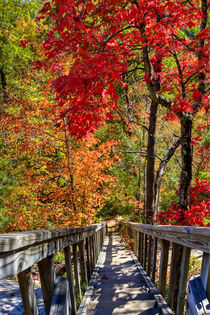 Wooden stairs in Autumn forest. USA, Kentucky by Irina Moskalev