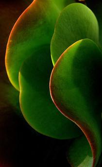 Succulent, Huntington Desert Garden  von Brian  Leng