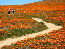 California Poppy Fields in California, USA von Brian  Leng