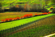 Vine Yards of Tuscany, Florence Italy. von Brian  Leng