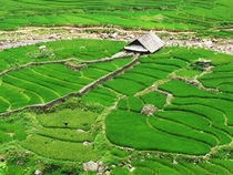 Rice Paddies by Jack Knight