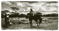 Horsebreaking in the venezuelan llanos von Juan Carlos Lopez