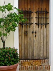 Door and two cats. Old San Juan, Puerto Rico by Irina Moskalev