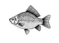 fish von Anna Ivanova