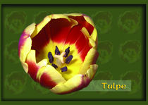 Tulpe by Ines Fritzkowski