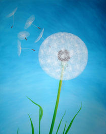 Dandelion by farbklecks