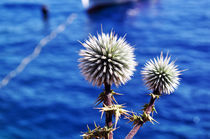 Blue Sea and Thistles by Katerina Vorvi