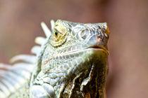 Dragon by safaribears