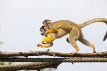 Squireel Monkey 2 von safaribears