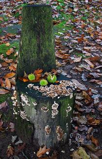 Wenn der Herbst sich nieder setzt by Wolfgang Dufner