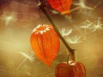 Herbstlich(t) by Franziska Rullert