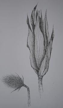 Distelblüte & Maiskolben von Katja Finke