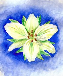 White Lily by Katri Ketola