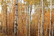Tobintrees