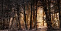 Wintermorgenlicht von Norbert Maier
