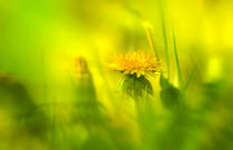 Sommerwiese by Norbert Maier