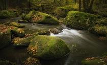 Herbstwasser von Norbert Maier