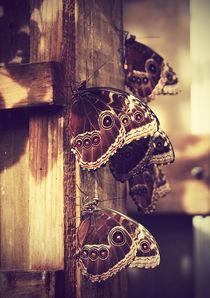 butterflies by Agata Luczyna