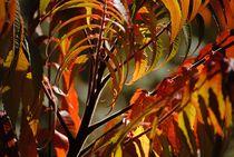 'Herbstfarben' von Elke Balzen