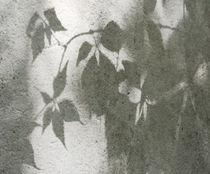 Schattenlaub2