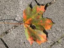 Ahornblatt im Herbst von Baerbel Nitychoruk