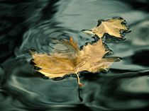 Love leaf with deep water by Jozef Zidarov