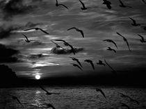 Silhouette of flying birds von Jozef Zidarov