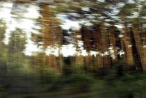 Fluechtiger Wald by Hartmut Fittkau