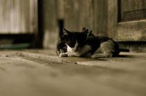 cats von emanuele molinari