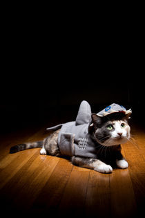 Shark Kitty by Nicolle Clemetson