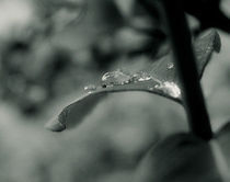 Drops in leaf by Jozef Zidarov