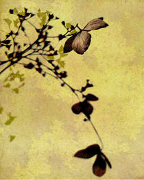 hydrangea art by Franziska Rullert