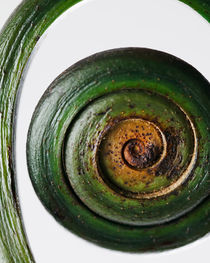 Fiddlehead by Colin Miller