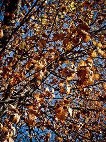 Fall in Central Park von Darren Martin