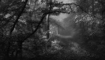Nebelwald by Norbert Maier