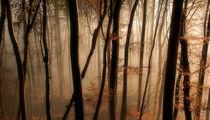 Roter Oktober von Norbert Maier