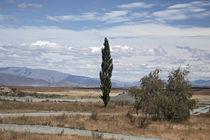 single poplar against a sky by michal gabriel