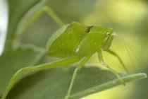 grasshopper von Alberto Prado