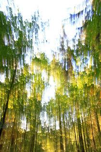 Waldimpression von Wolfgang Dufner