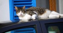 Katze auf dem Autodach von Thomas Brandt