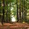 Waldweg-im-herbst-1
