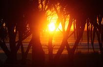 Sunrise von aleszev