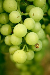 Grapes by Thea  Kiaer