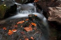 autumn von Danislav Mironov